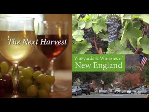 The Next Harvest... Vineyards & Wineries of New England