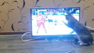 Кошка болеет за наших! Хоккей Россия Германия