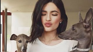 Best Celebrity Puppies!   National Dog Day!
