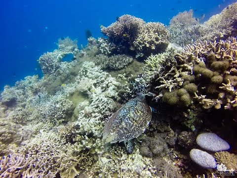 Adrenaline Romance - Scuba Diving in Cantagay Marine Sanctuary, Jagna, Bohol