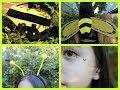 Bumblebee Halloween Tutorial: Hair, Makeup, and Costume!