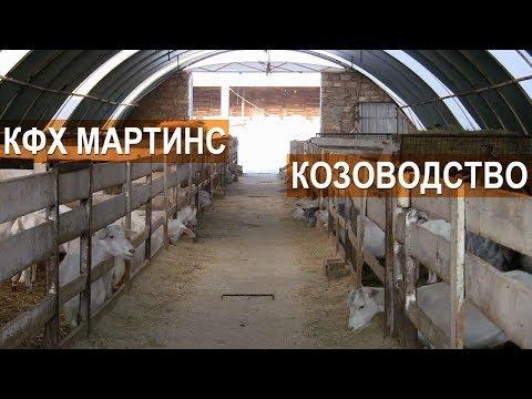 Смотреть Разведение и содержание коз. КФХ Мартинс. Крым онлайн