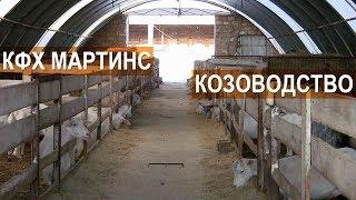 Разведение и содержание коз. КФХ Мартинс. Крым