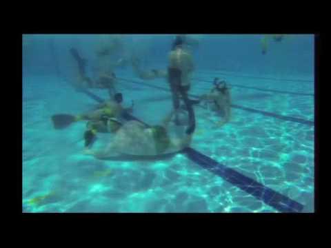 Underwater Hockey Queensland Australia 2 Live Stream