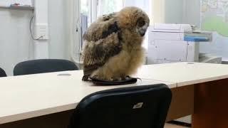 Когда Ёлка была маленьким милым хлебушком-фублинёнком. Очень милая сова.