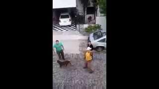 Download Video Brutal agresión de tres personas conta perra causa indignación en redes (VIDEO) MP3 3GP MP4