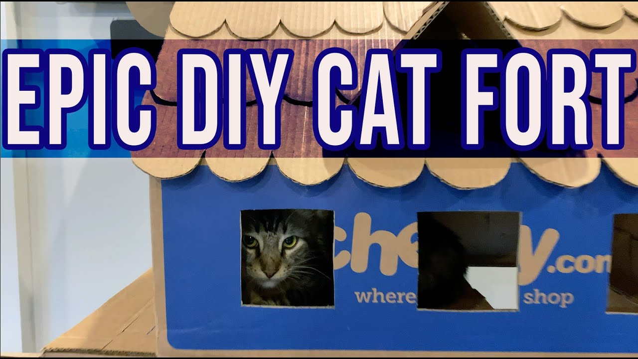 The Most EPIC Cat Fort - Building with Help from my Cats