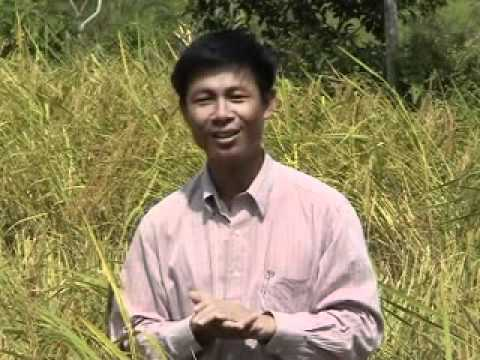 Rice seed production and storage