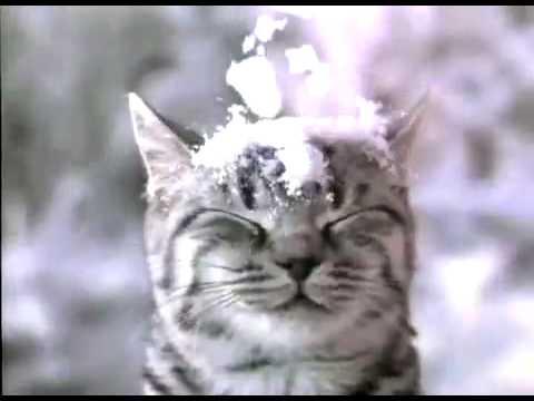 Whiskas let it snow 2008 youtube - Lustige schneebilder ...