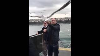 Martı yakalama catching albatross поймал чайку