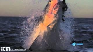 Нападения акул