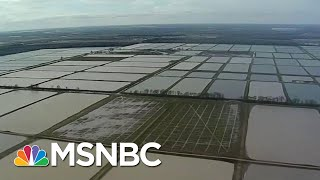 Historic Midwest Floods Expose Fragile Ecosystem | All In | MSNBC
