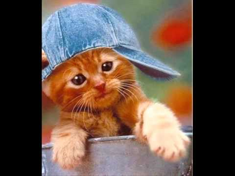 Des chats marrants - YouTube