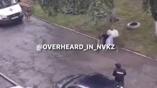Полицейский застрелил собаку в Новокузнецке в Новоильинском районе