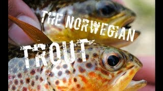 The Norwegian Adventure... Part 2: Flyfishing for trout