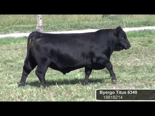 Byergo Titus
