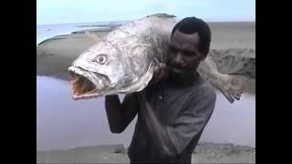 Cara Mancing Ikan Tradisional Suku Asmat Papua Indonesia