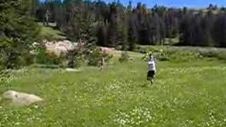 Mountain Meadow Flower Frolic