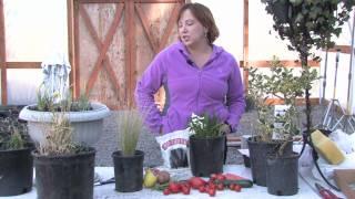 Gardening Tips : How to Grow Barley
