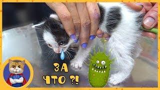 Лечение маленьких котят