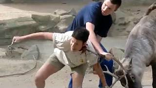 Deer Attack in zoo