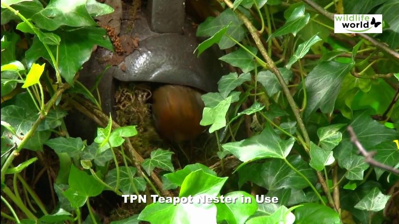 Wildlife World Robin Teapot Nester Green