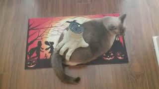 Cat Enjoys Massage From Creepy Halloween Hand
