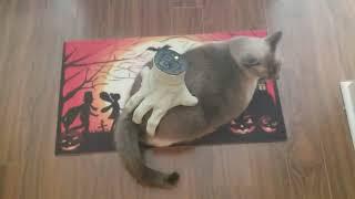Download Kiko is getting into the Halloween spirit. - 1005044