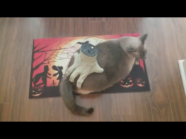 Kiko is getting into the Halloween spirit. – 1005044