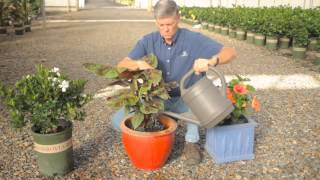 How to Take Care of Outdoor Potted Plants Over Winter : Fall & Winter Gardening Tips