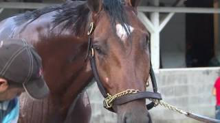 One-eyed horse, Patch,  to run in Derby 143