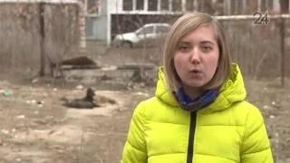 Бездомные собаки оккупировали детскую площадку на ул. Октябрьской в Казани