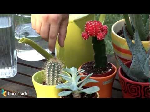 Cuidar cactus y plantas crasas (Bricocrack)