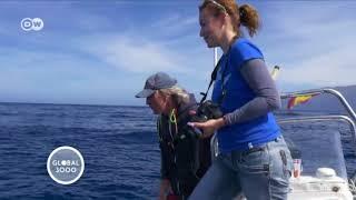 Das Geschäft mit den Delfinen in Spanien | DW Deutsch