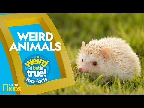 Weird But True Animals 10