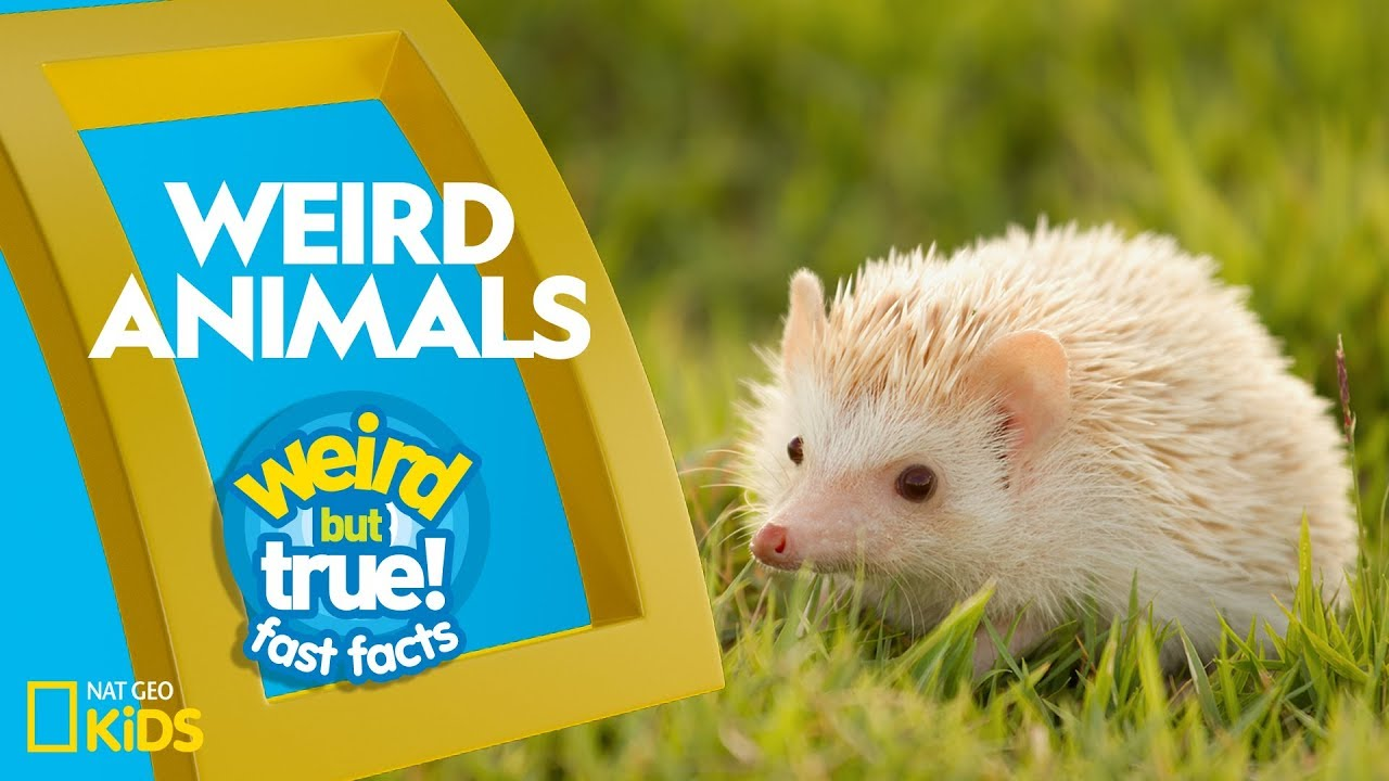 Weird Animals | Weird But True!—Fast Facts