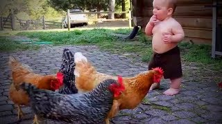 Cute Chickens 🐔🐔 Playful Funny Chickens (Part 2) [Funny Pets]