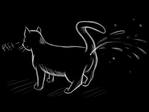 Wie Man Katzenurin Am Besten Beseitigt