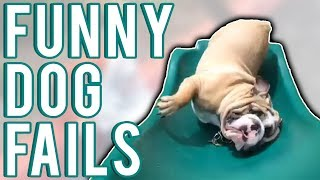 Funny Dog Fails June 2017 | A Fail Compilation by FailUnited