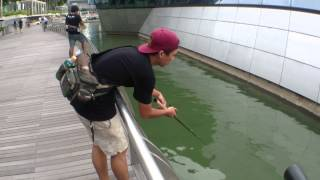 Trailer : Singapore Urban Fishing