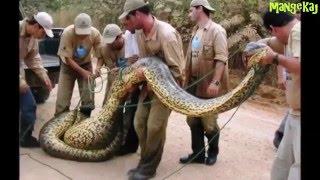 Самые большие животные мира +от mangekaj