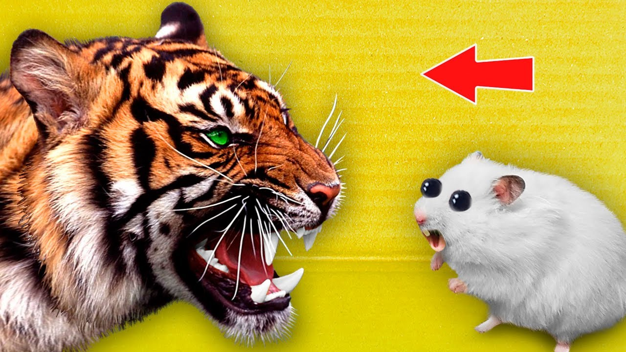 🐆 Tiger - Hamster Maze with Traps ☠️ [OBSTACLE COURSE]