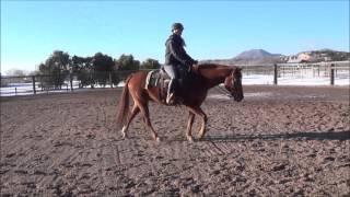 """""""Nonstop Red Hancock"""" 2006 Sorrel 15.2 hand Quarter Horse Gelding"""