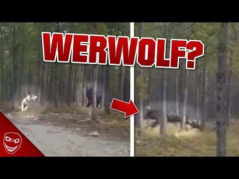 Was Ist Das? Video Zeigt Gruseliges Wesen Aus Den USA! Werwolf?