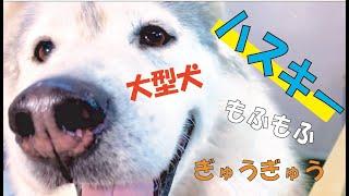 番組提供:ペットライン株式会社(http://www.petline.co.jp/) クール...