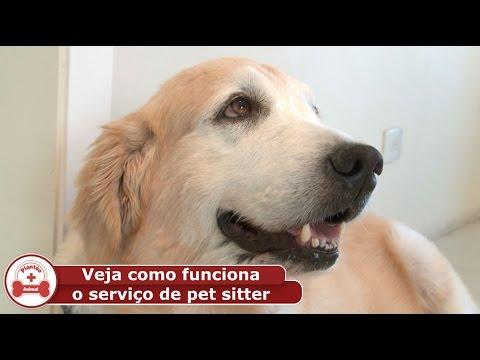 Veja como funciona o serviço de pet sitter