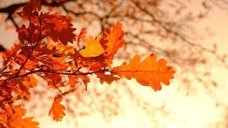 autumn leaves 오르골 연주를 위한 악보를 만…