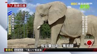 解密動物超能力 象腿可測暴風雨