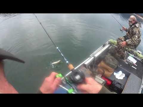 Shasta Lake Trout