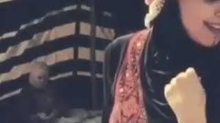 أروع الأغاني البدوية أسمر ياغالي
